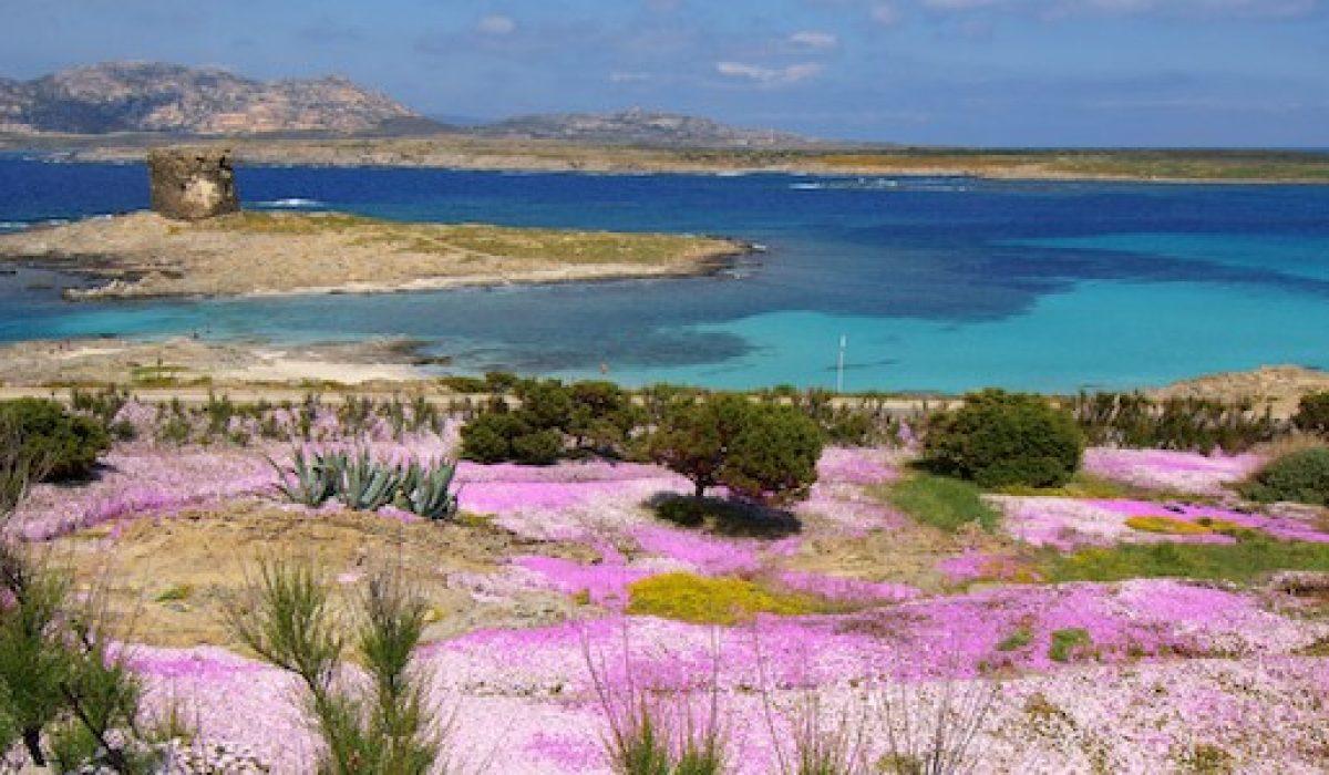 Matrimonio Spiaggia Alghero : Matrimonio in sardegna a stintino u ultimo lembo di terra sarda